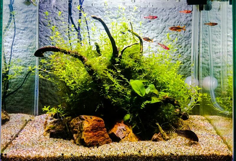30cm水槽 水草水槽