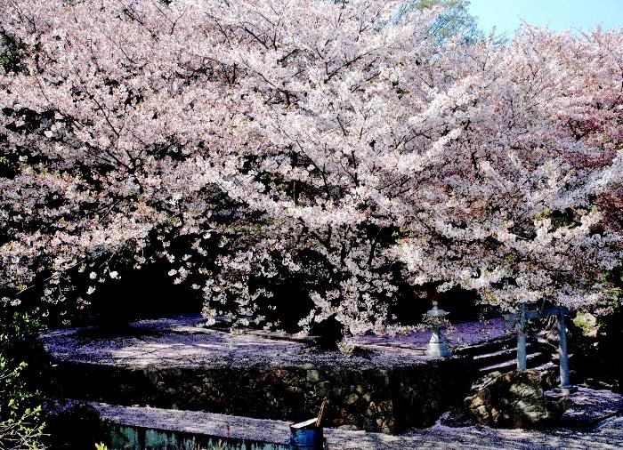 滝宮 036 - コピー (700x506)