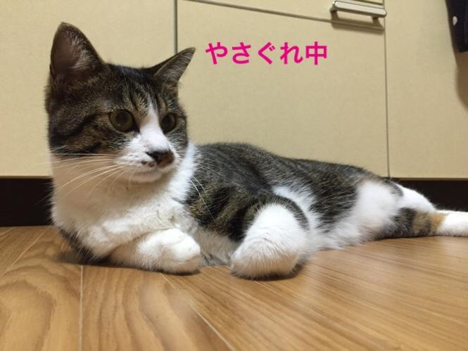 fc2blog_201507301502121dc.jpg