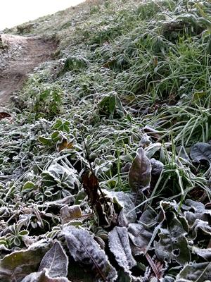 土手の霜1412