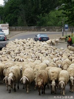 スペイン巡礼路羊1501