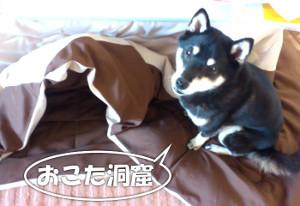 141220_anaokota.jpg