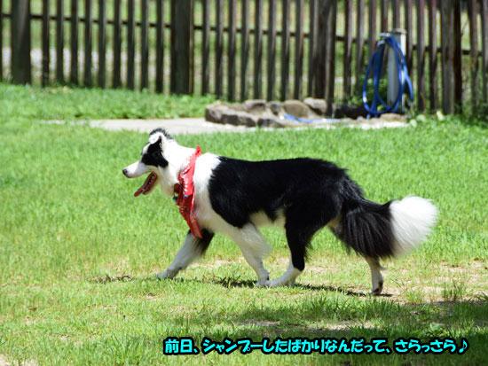 DSC_0004_201507211543253d5.jpg
