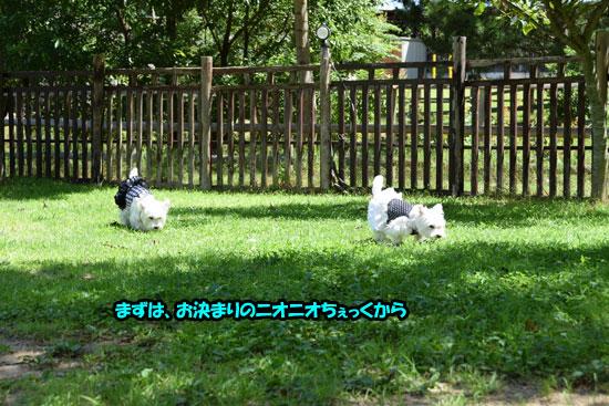 DSC_0008_20150721154326bdd.jpg