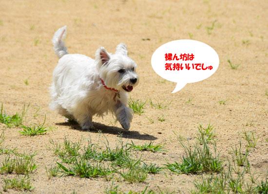 DSC_0044_20150721154459874.jpg