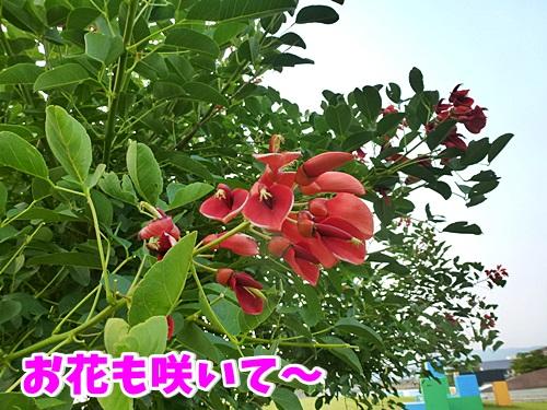 お花も咲いて