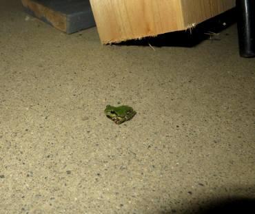 2015_06 28_現場へ客人・雨蛙ロング