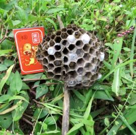 2015_07 12_畑で蜂刺され・2