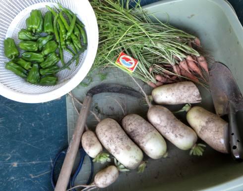 2015_07 21_7月21日の収穫・1