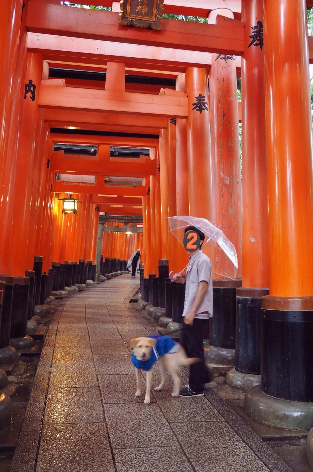 伏見稲荷 わんこ 京都