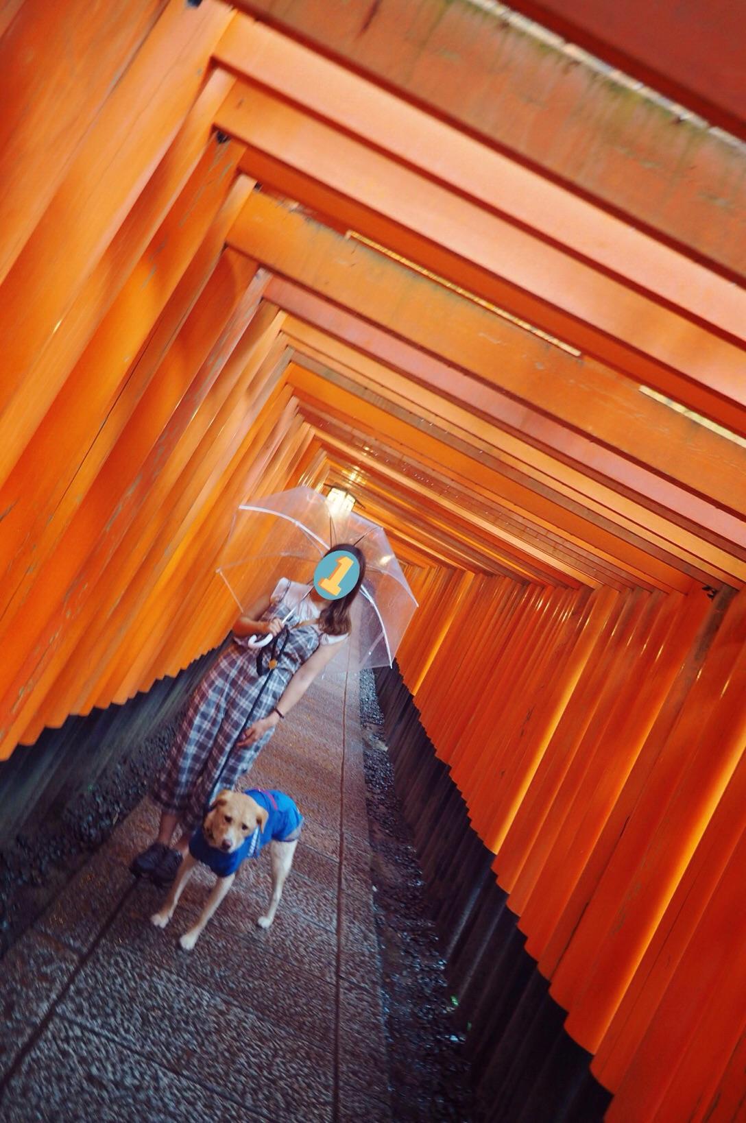 京都旅行 大型犬 伏見稲荷