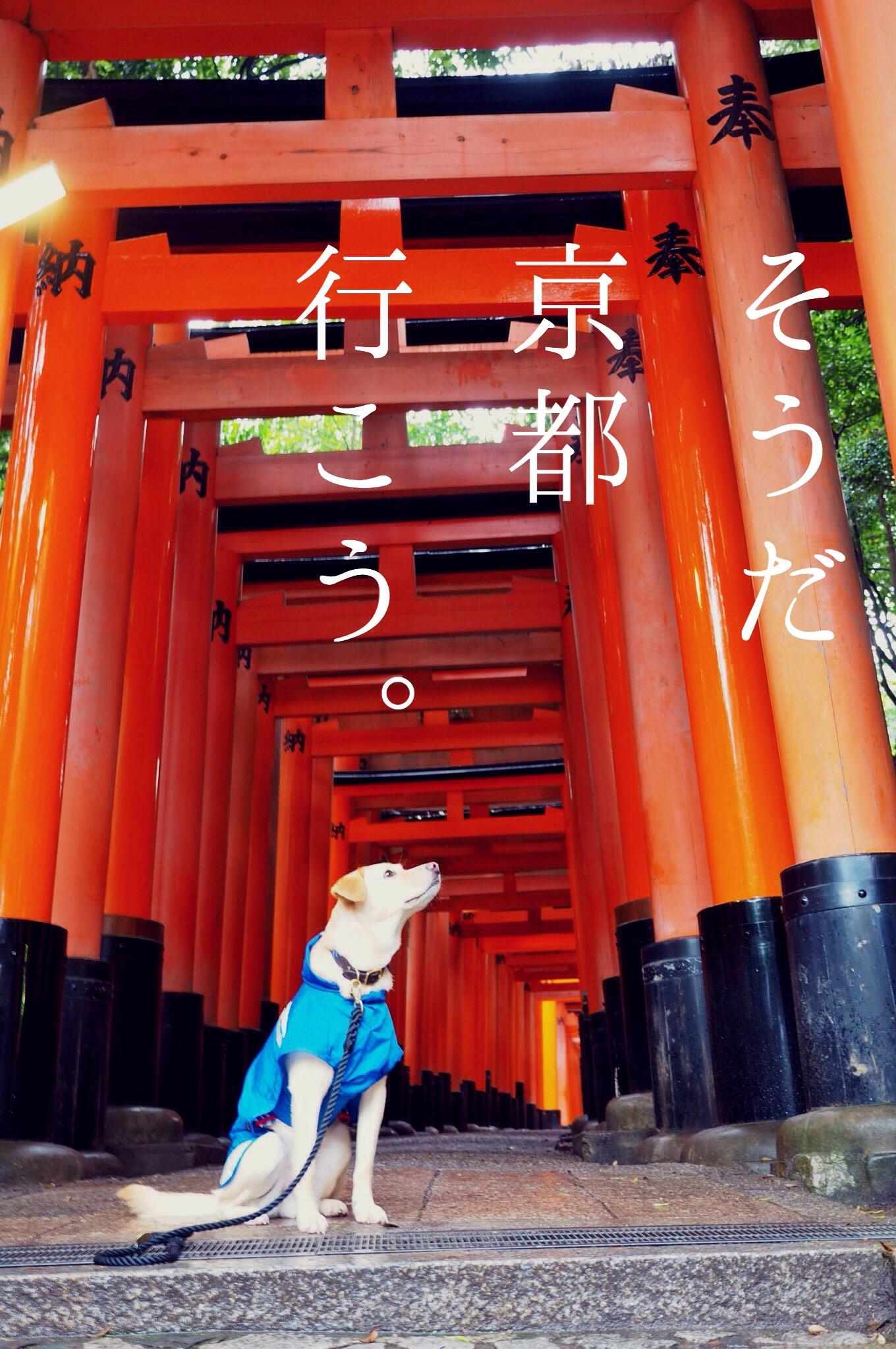 京都旅行 わんこ 大型犬 伏見稲荷