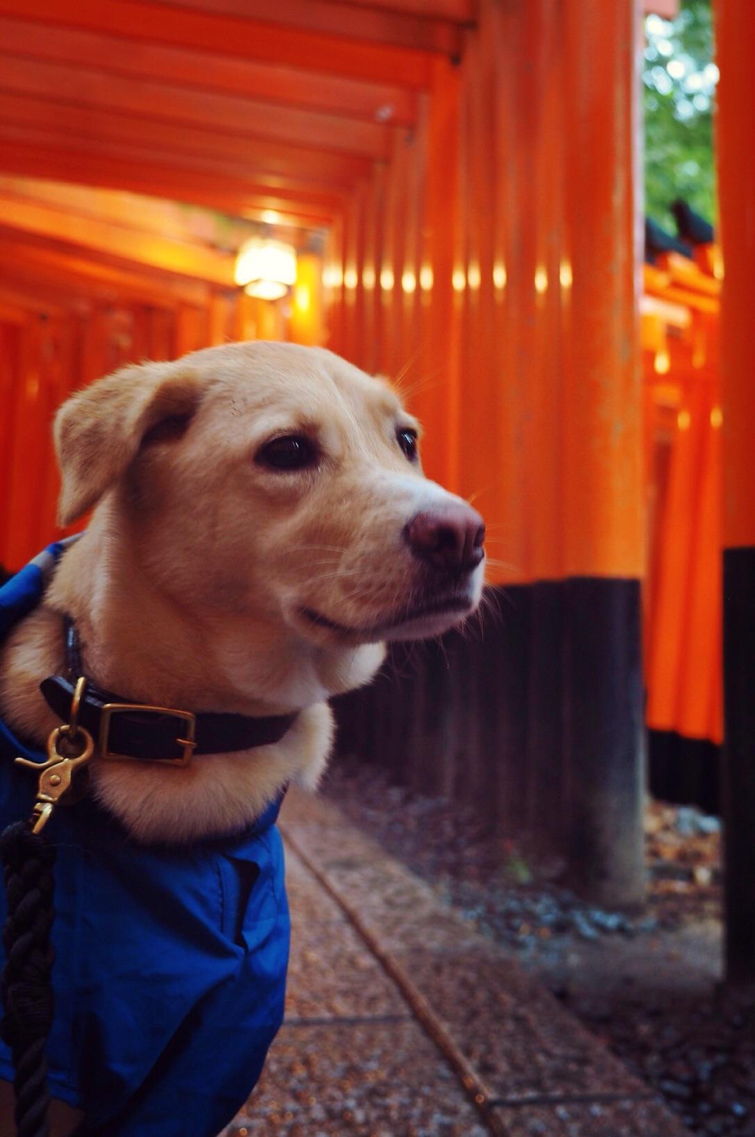 京都旅行 犬