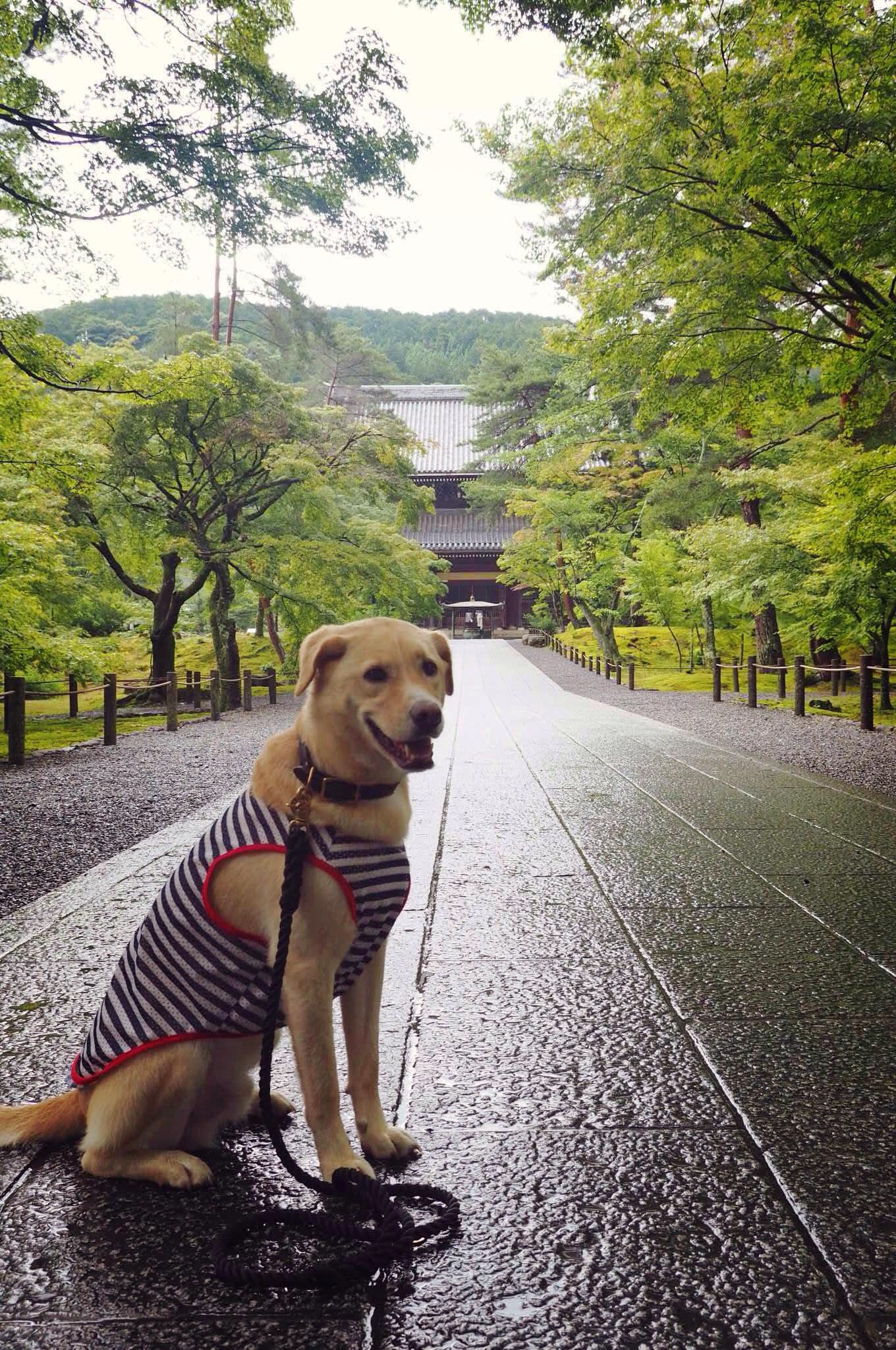 南禅寺 犬 京都