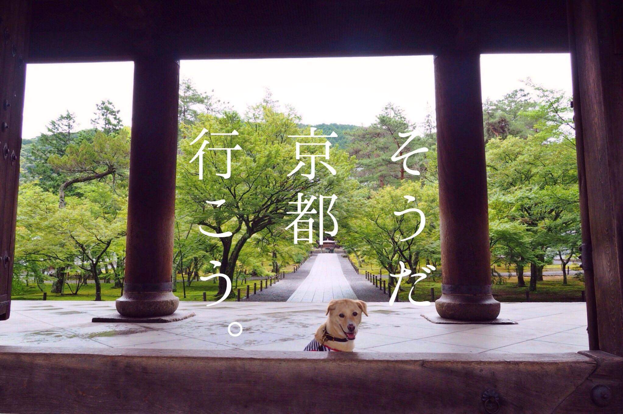 京都旅行 わんこ 犬 南禅寺