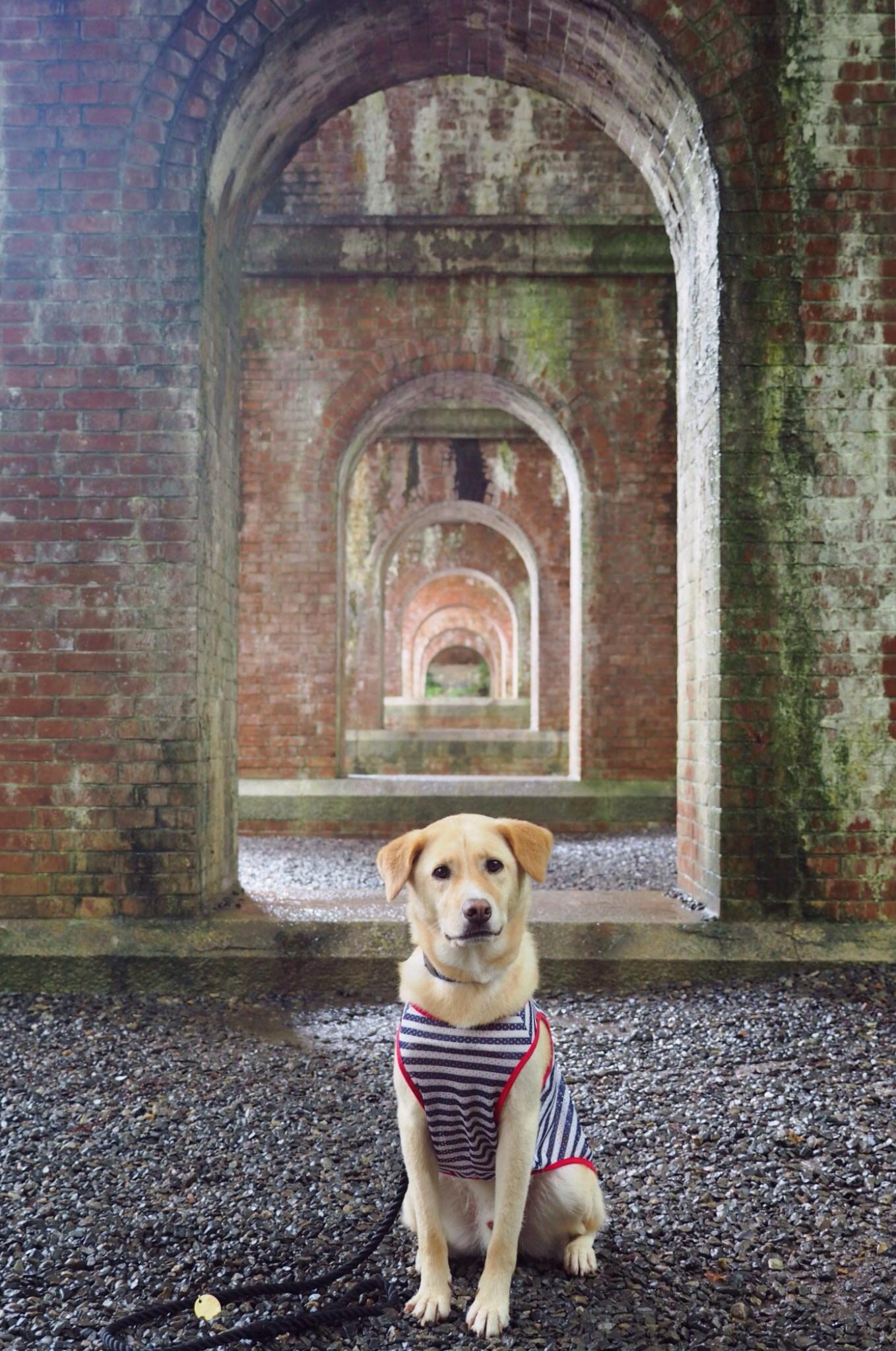 南禅寺 犬 わんこ 大型犬