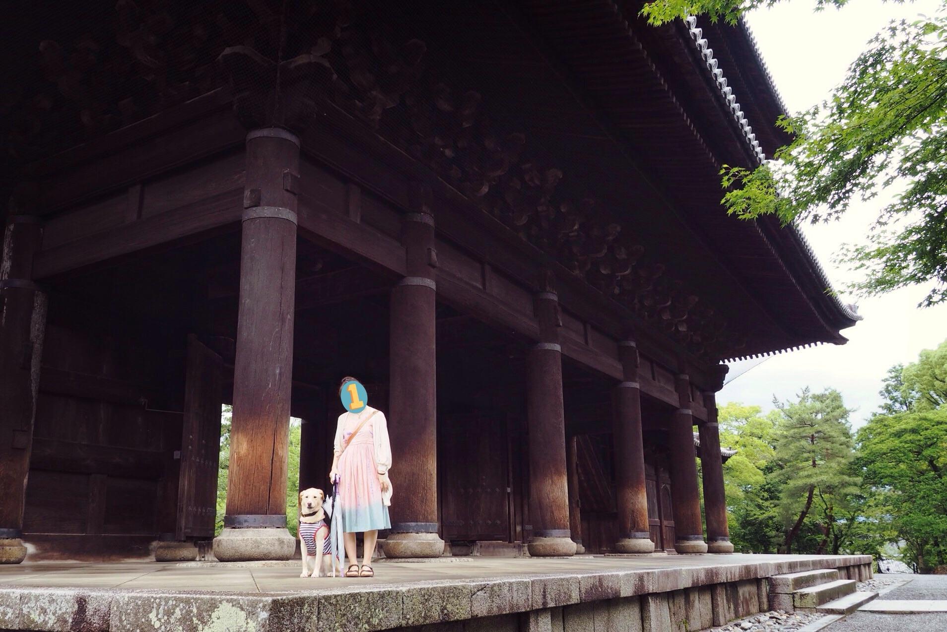 南禅寺 わんこ 京都旅行 犬