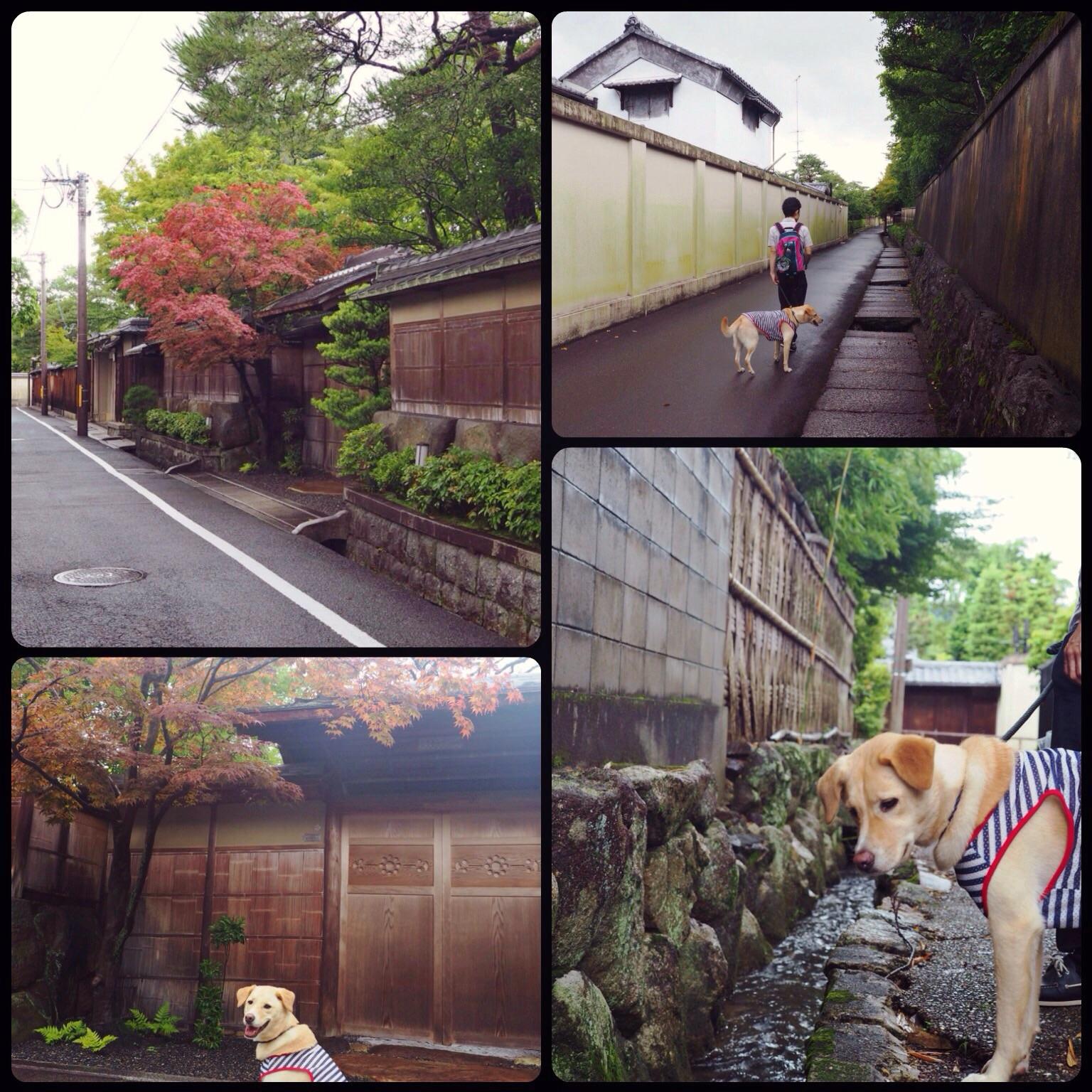 京都旅行 わんこ 大型犬