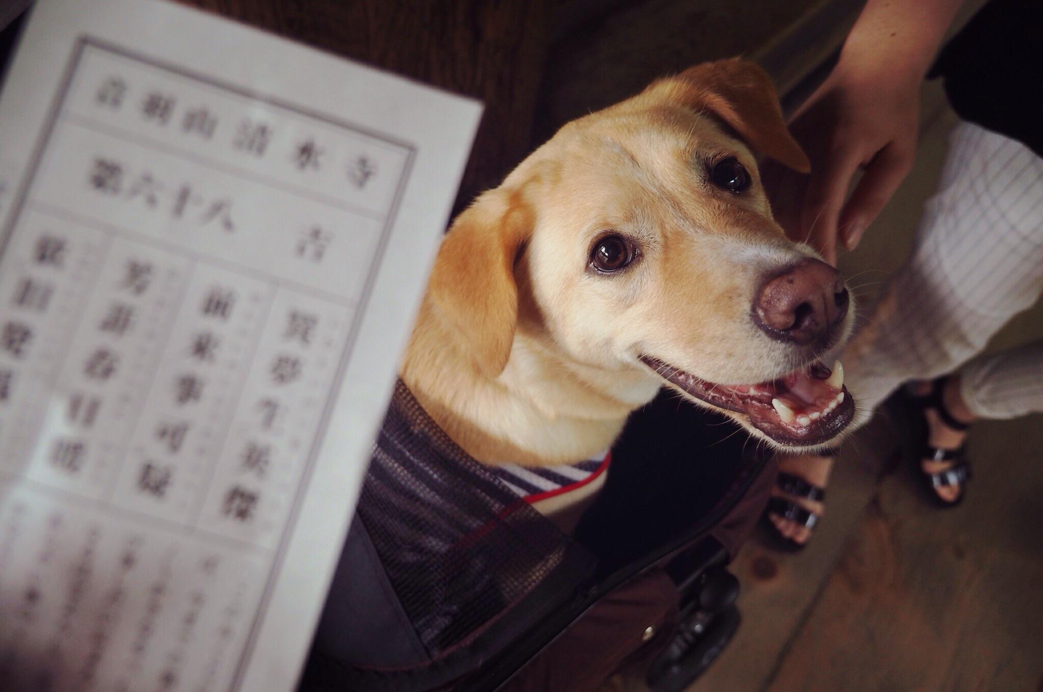 清水寺 京都旅行 わんこ 犬