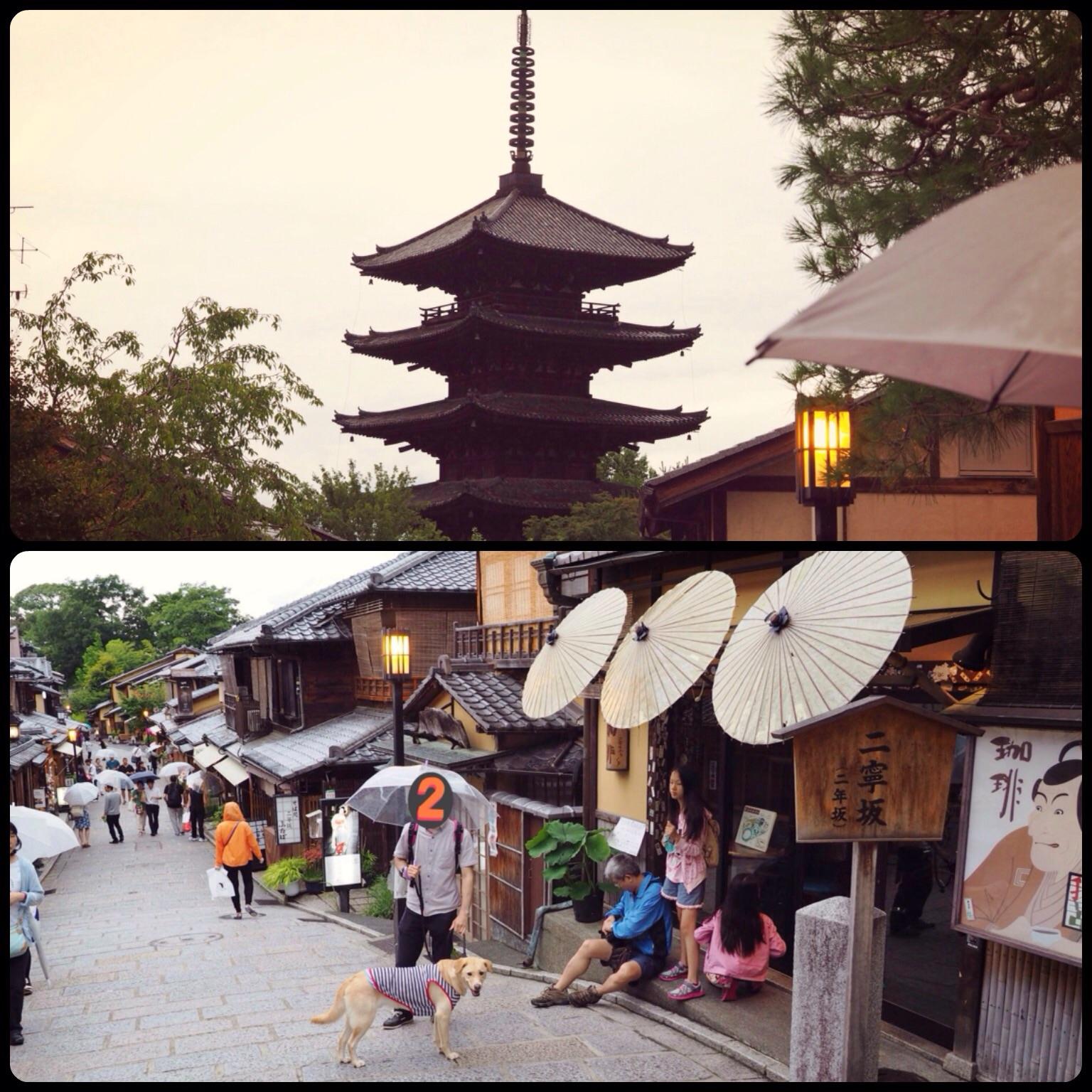 京都 犬 わんこ 旅行