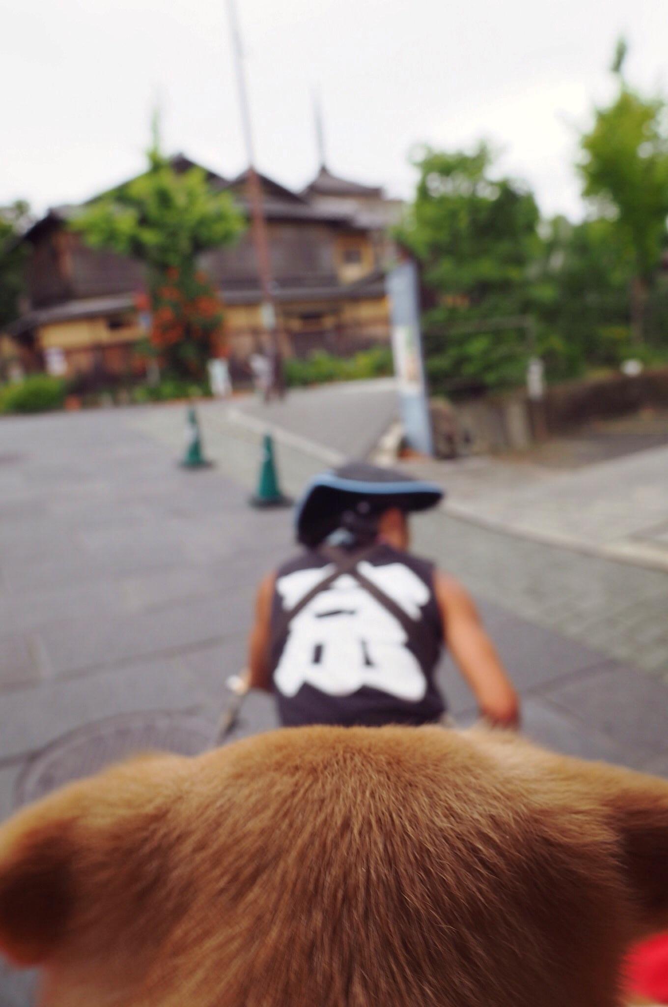 京都 人力車 大型犬