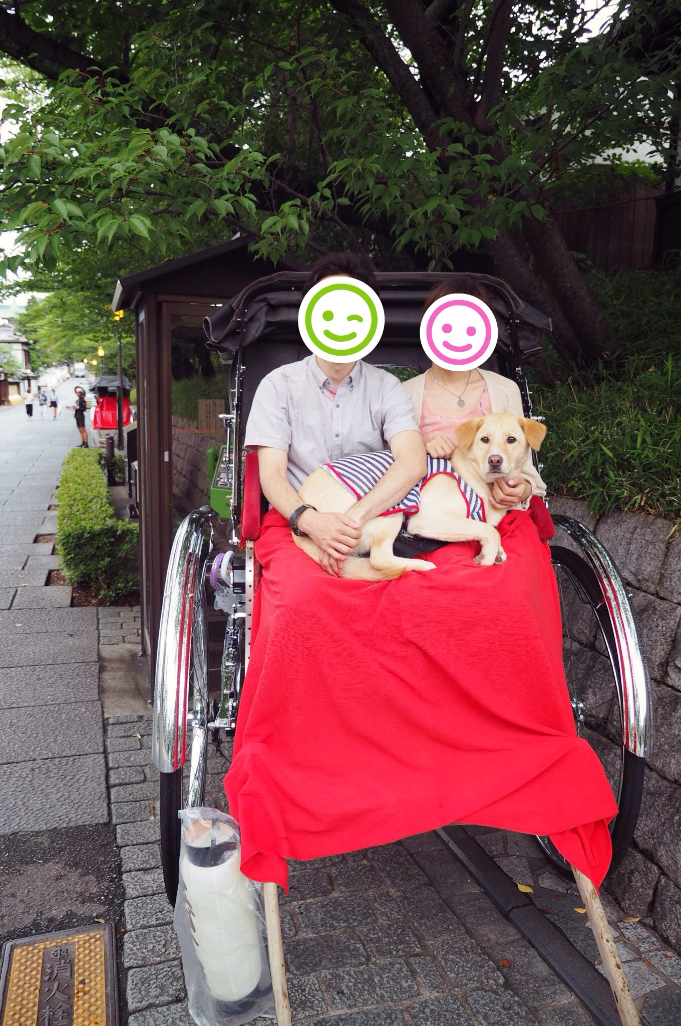 京都 人力車 大型犬 わんこ