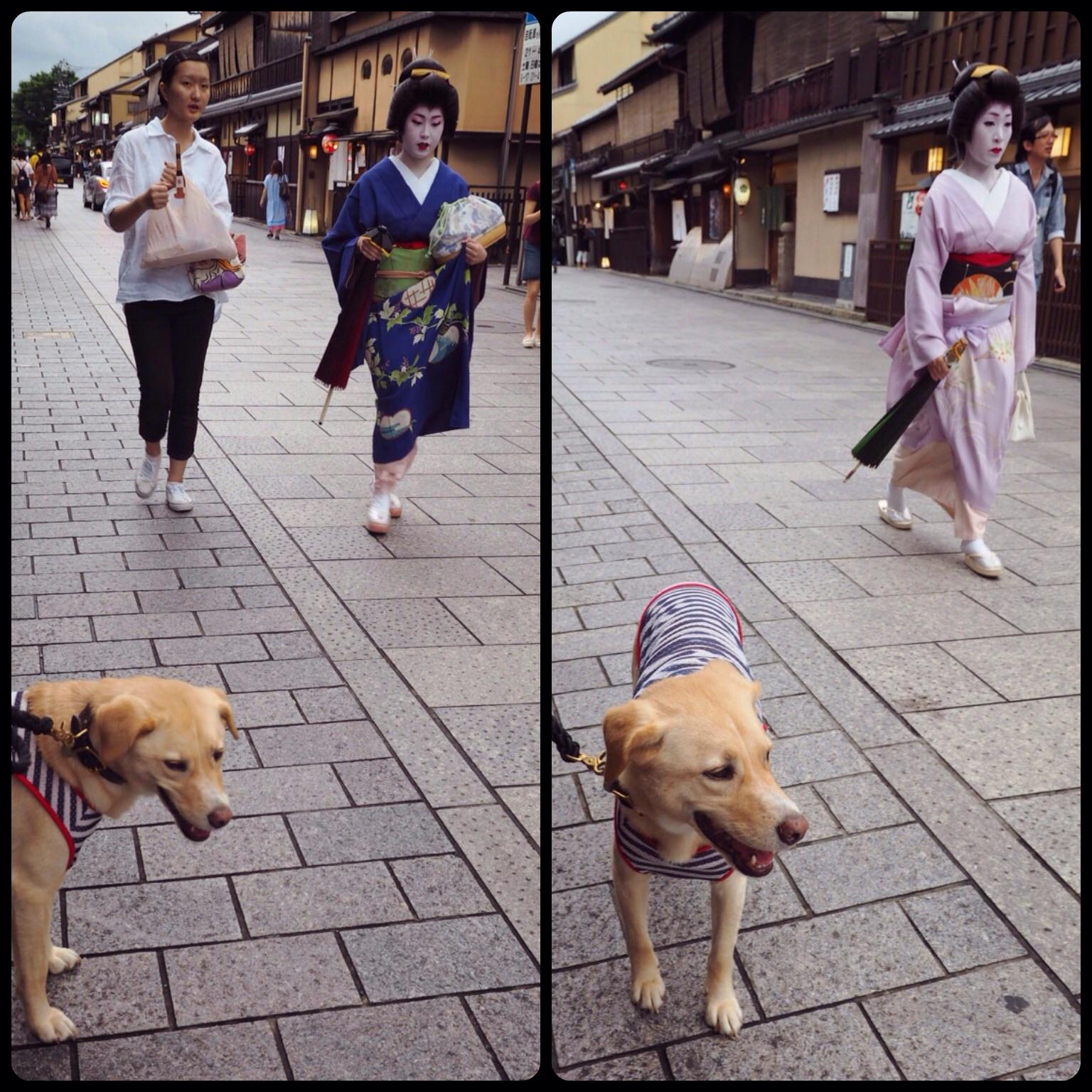 京都旅行 祇園 わんこ 犬