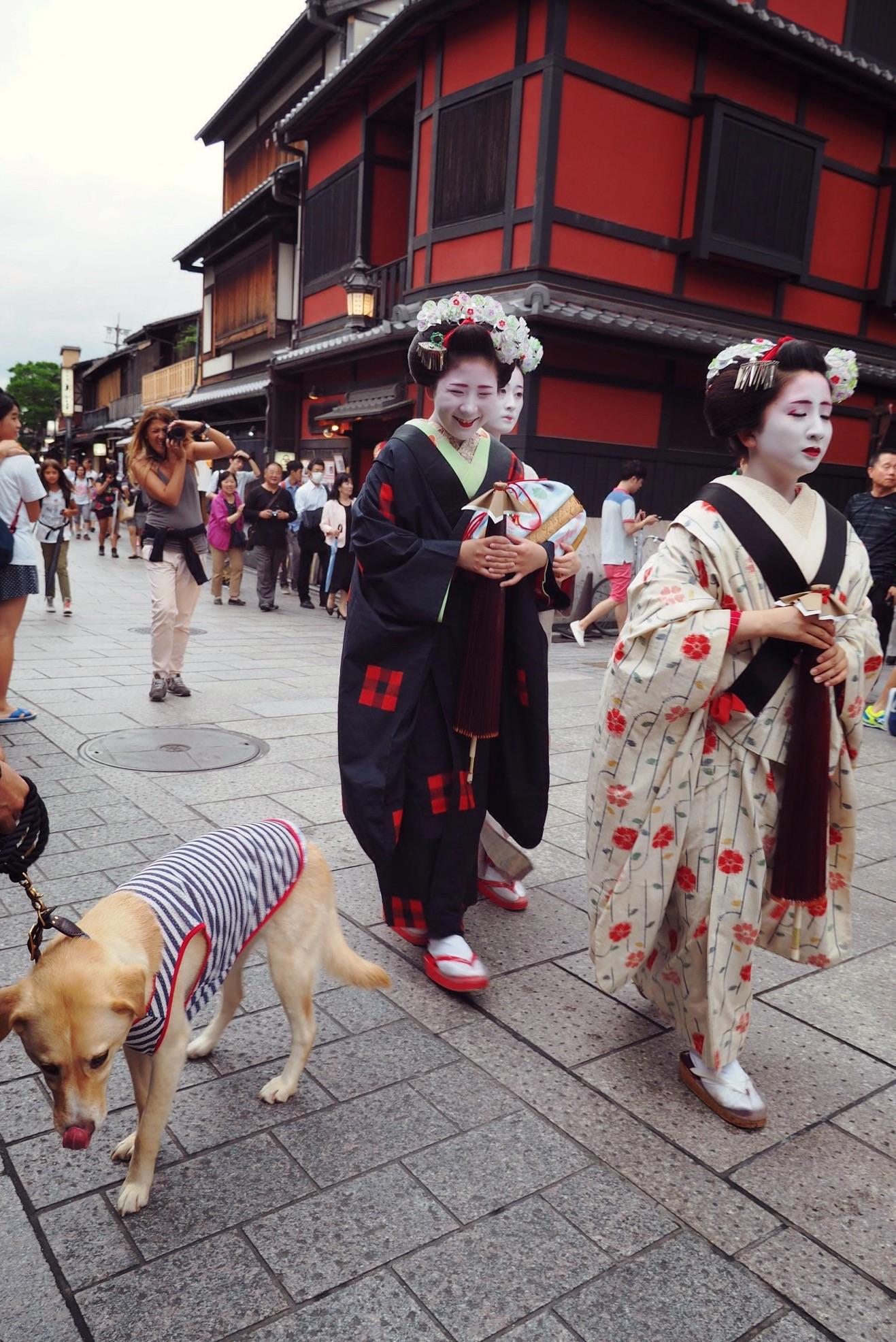 京都旅行 大型犬 わんこ 舞妓