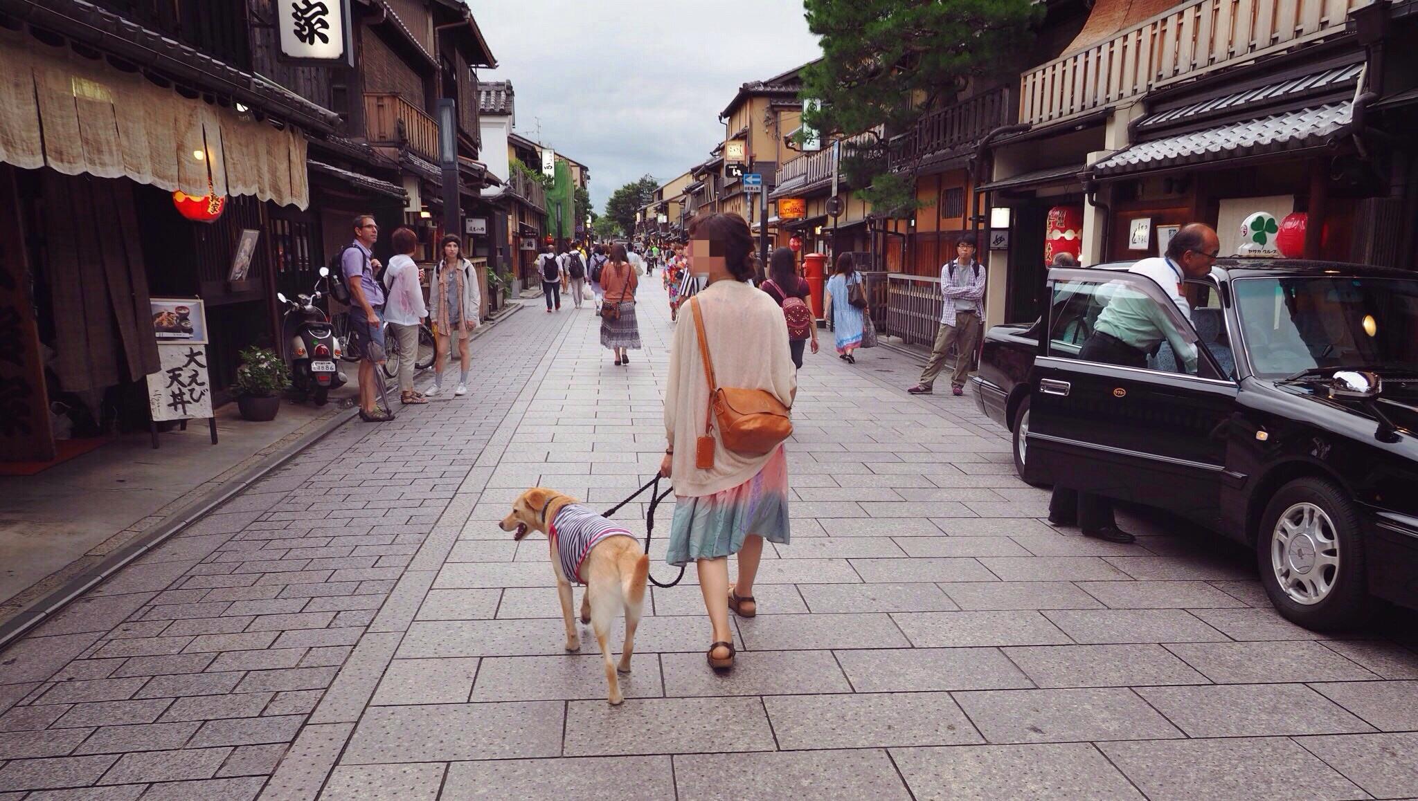 祇園 わんこ 犬