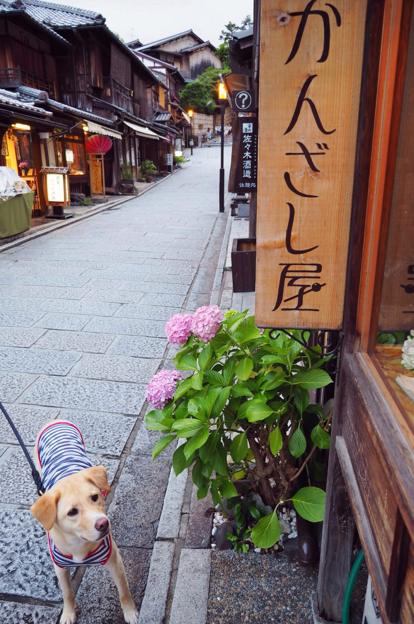 京都旅行 わんこ 犬