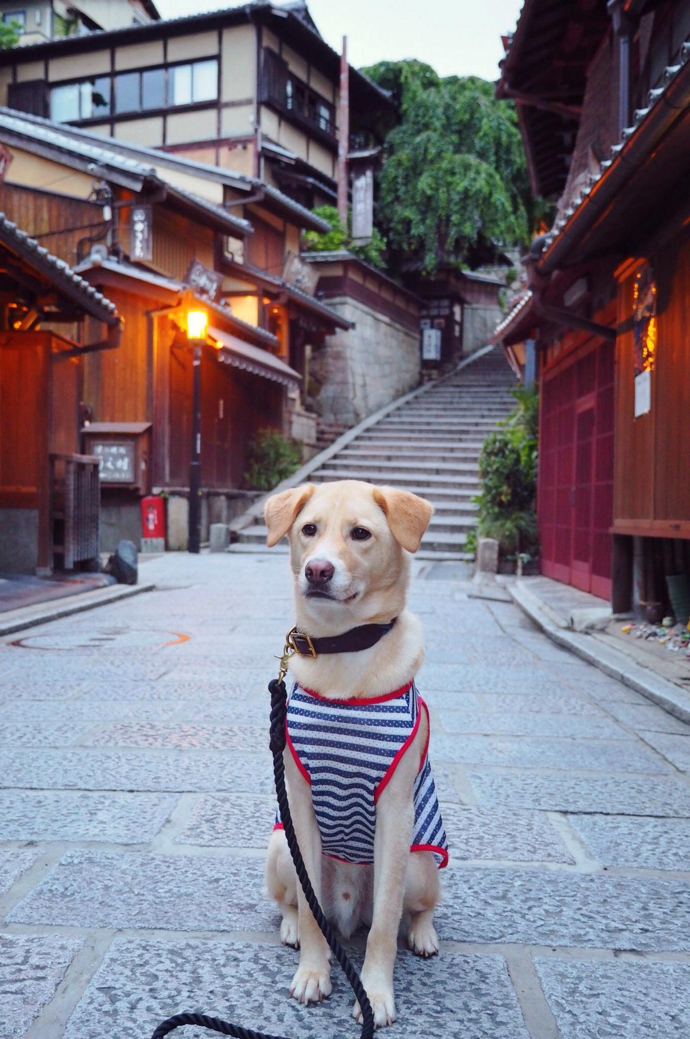 京都旅行 犬 わんこ
