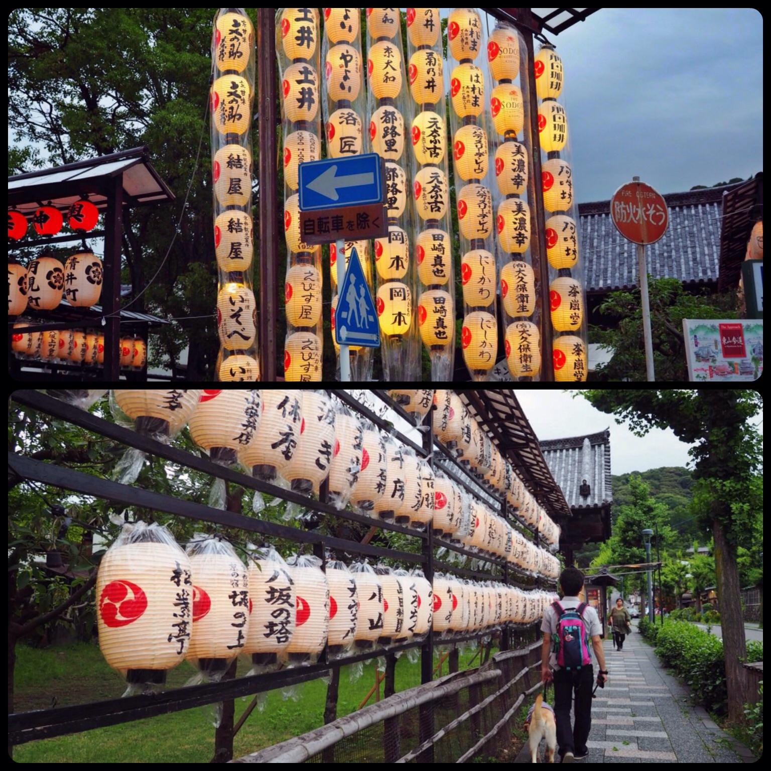 京都旅行 大型犬