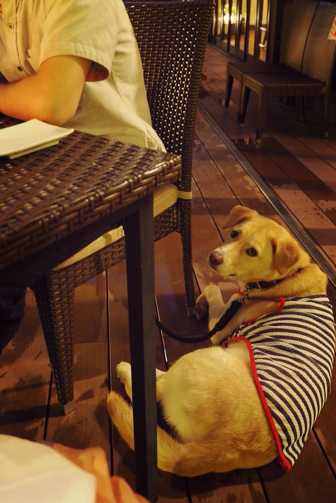 ヒガシヤマガーデン わんこ 犬