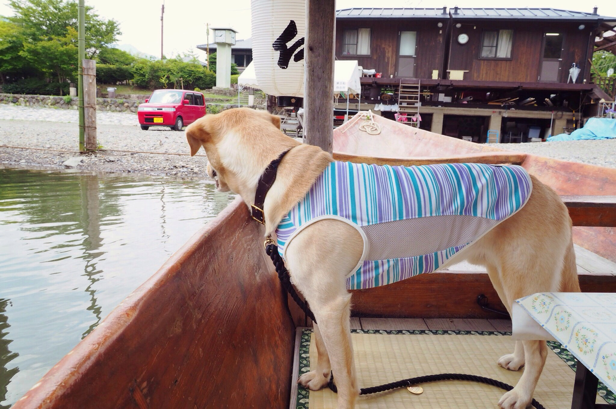 嵐山 屋形船 大型犬 わんこ