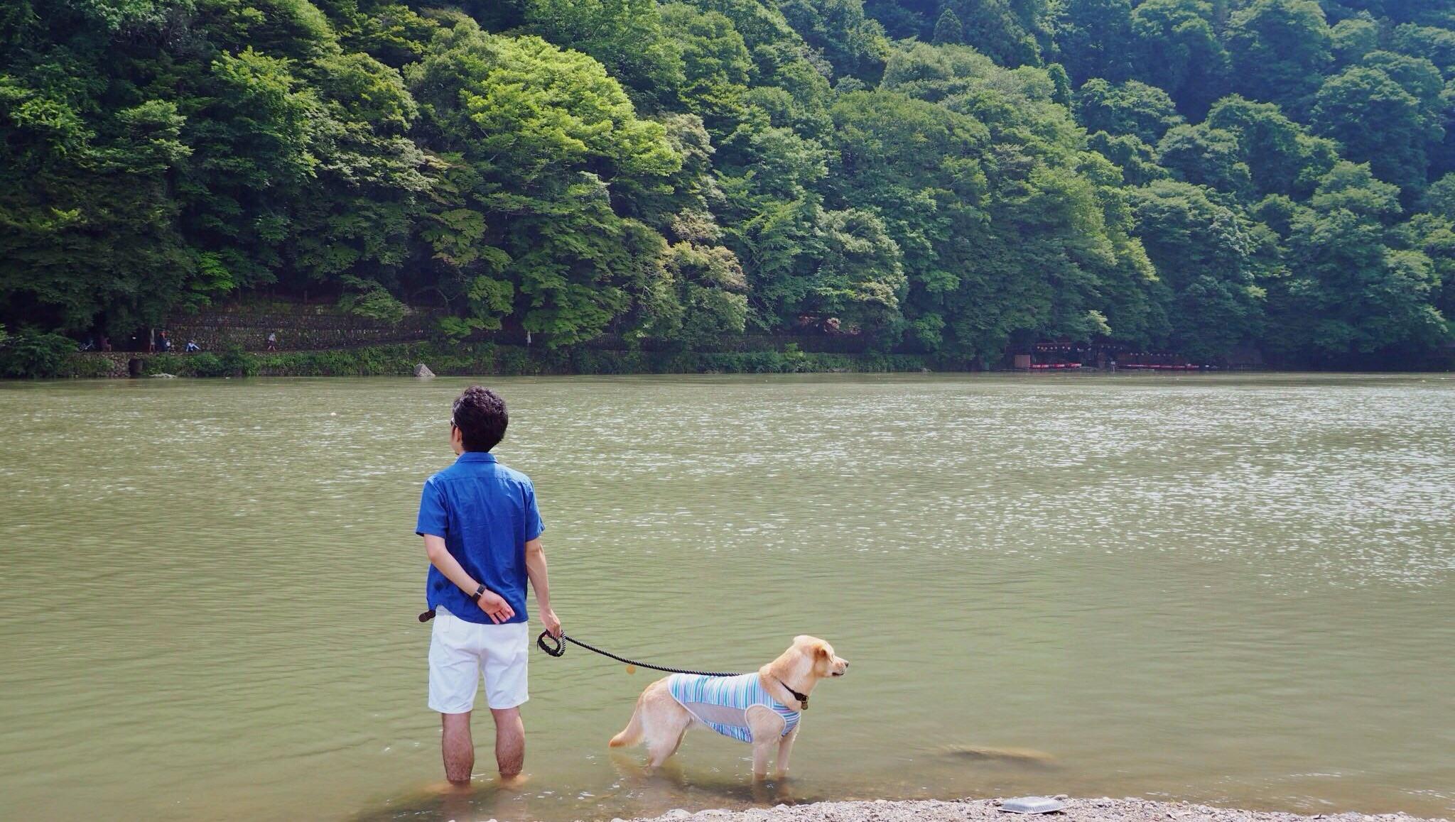 嵐山 大型犬 わんこ 泳ぐ