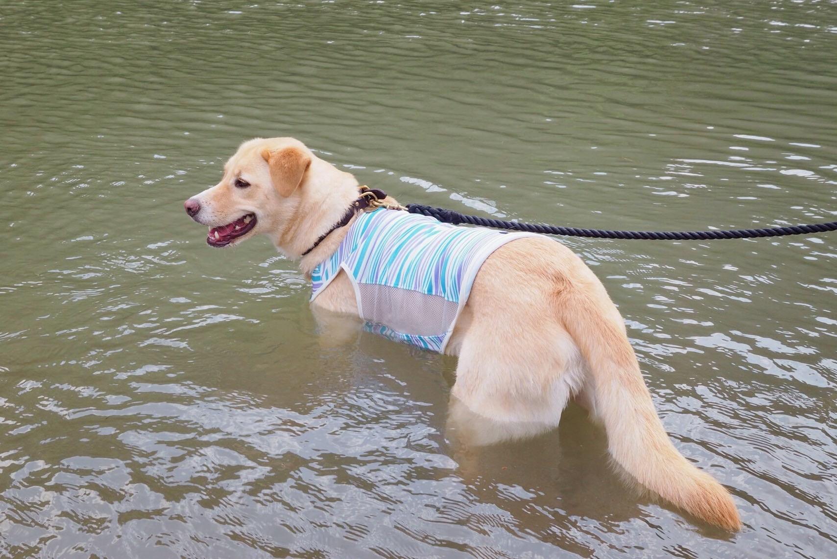 嵐山 犬 泳ぐ