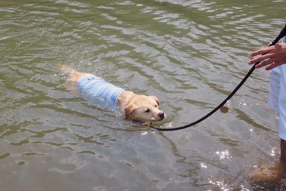 嵐山 大型犬 泳
