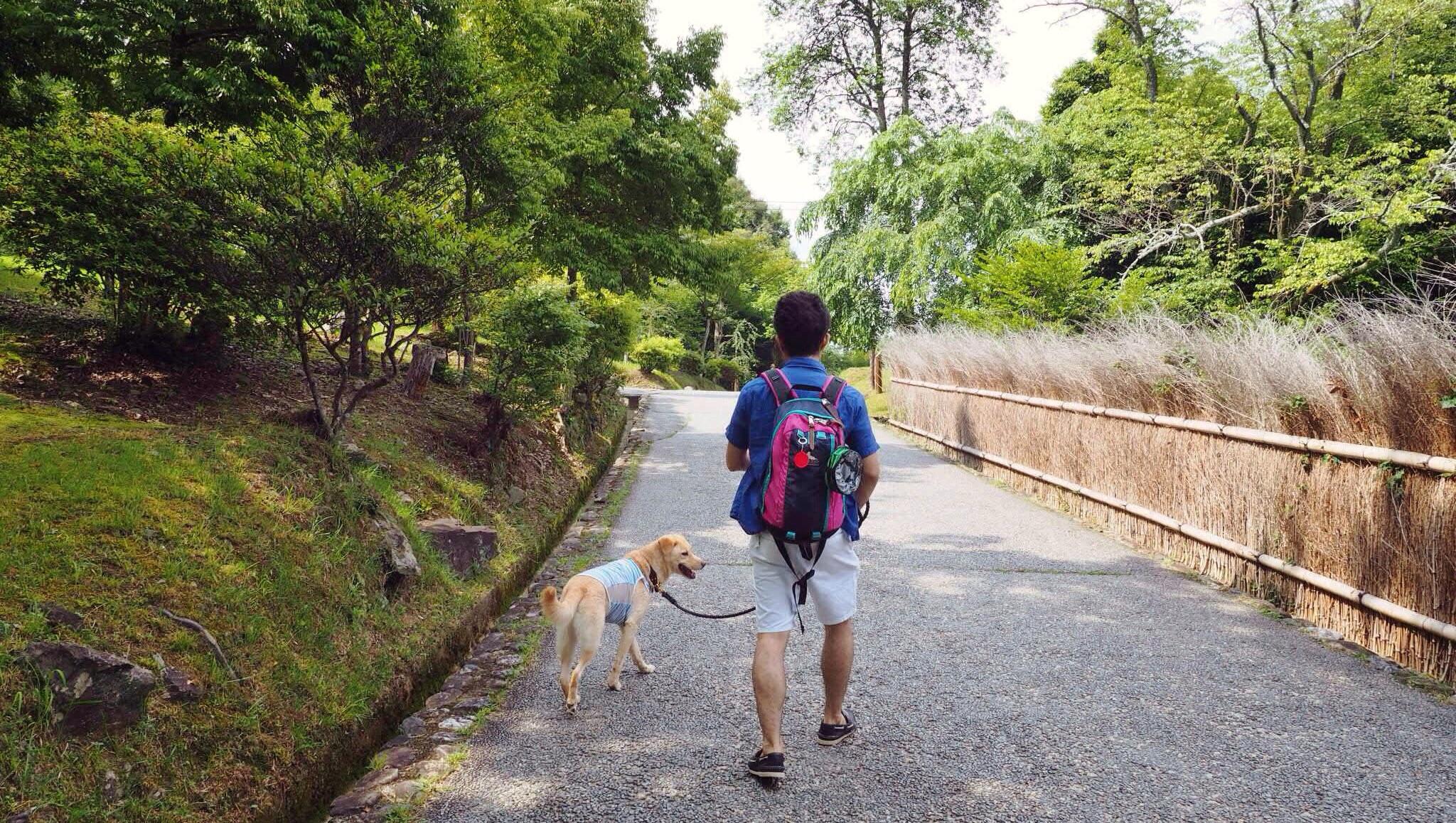 嵐山 竹林 大型犬 わんこ
