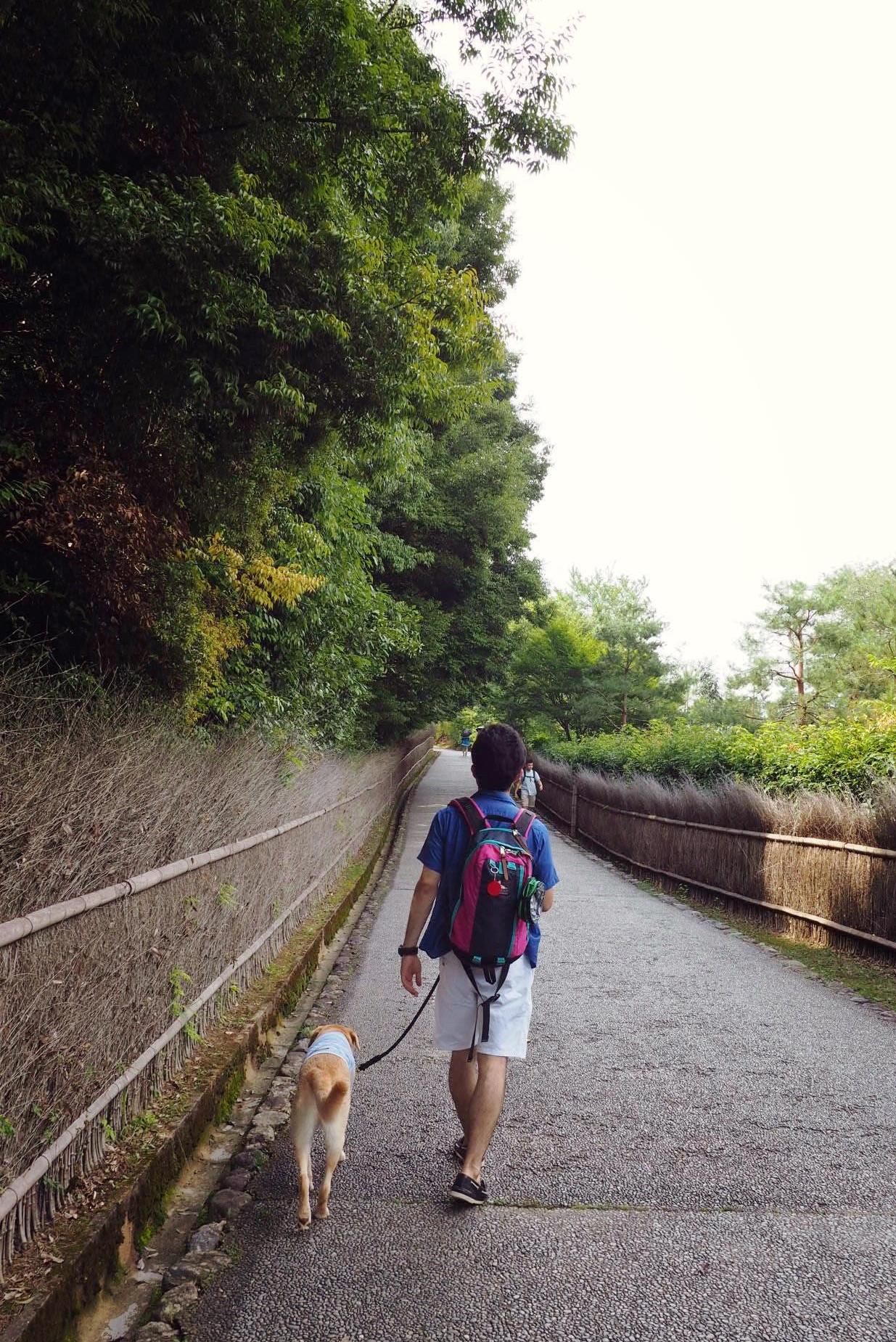嵐山 竹林 わんこ