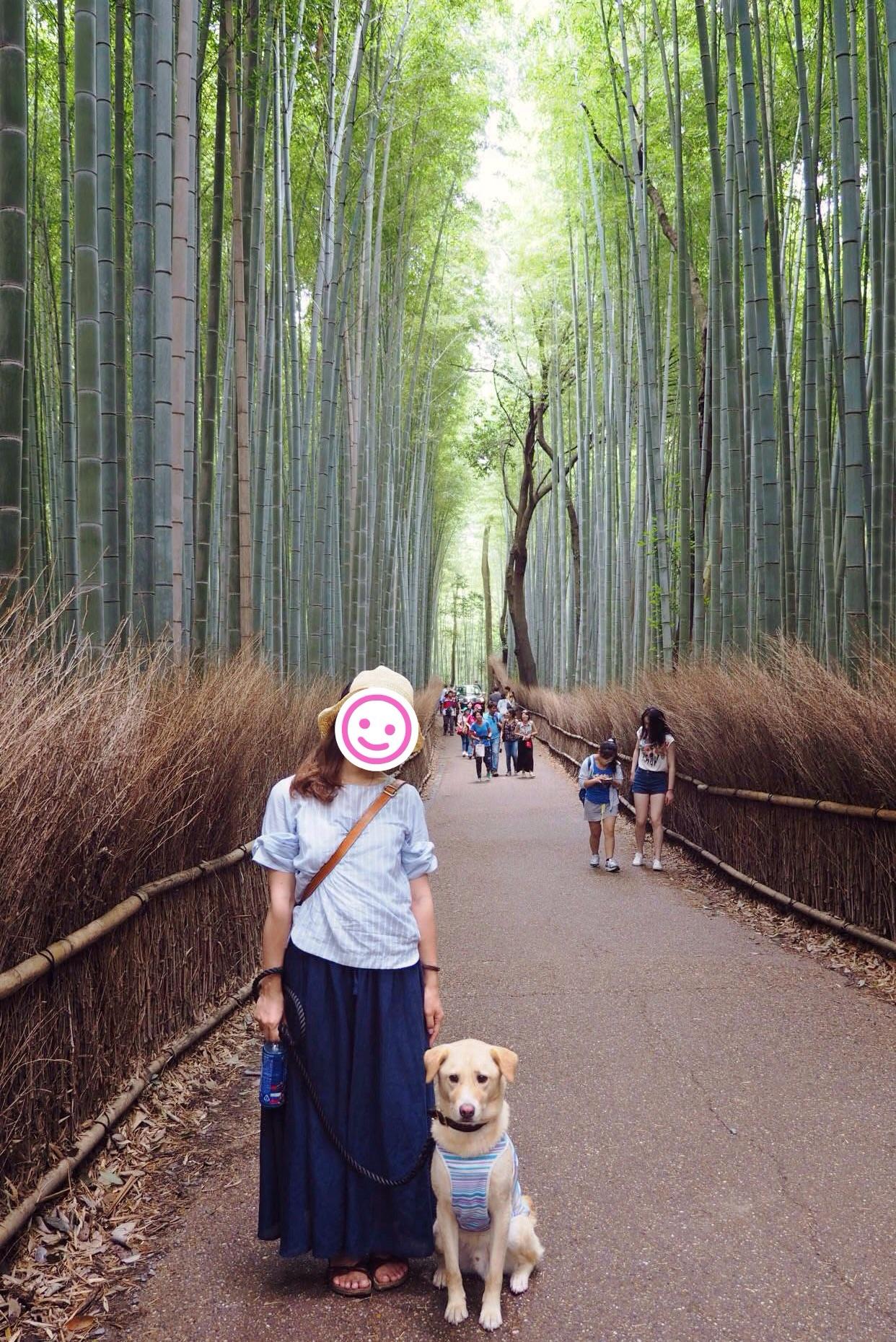 竹林の小径 大型犬 わんこ 京都