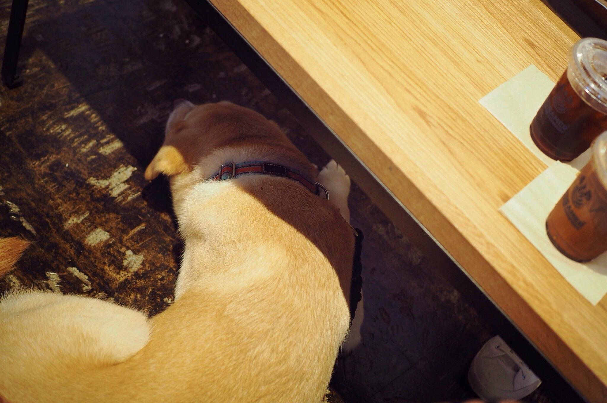 ストリーマーコーヒーカンパニー 茅場町 犬 わんこ