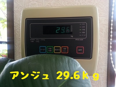 20150718ange1.jpg