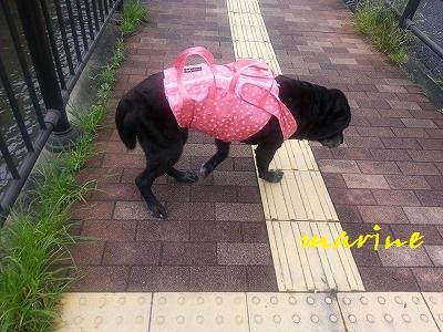 20150718marine1.jpg