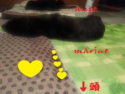 20150723marineange1.jpg
