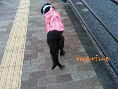 20150801marine5.jpg