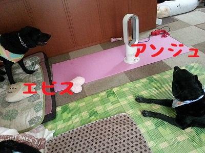 20150802_12.jpg