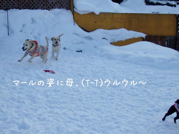 maruhasiru_20141231204000e2e.jpg