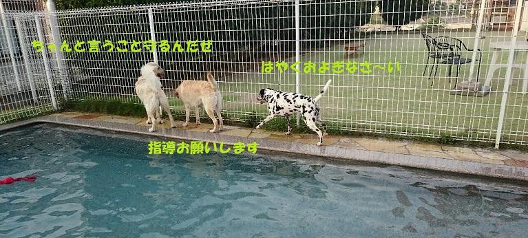 DSC_0509_1.jpg