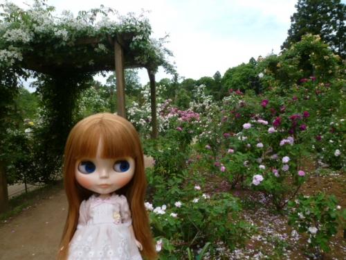 草ぶえの丘バラ園♪