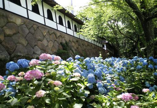 石垣と紫陽花(27.6.28)